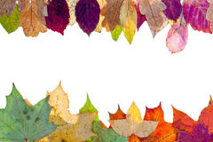 Two side frame from pied autumn leaves Stock Image