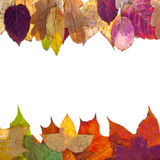 Two side frame from varicolored autumn leaves Stock Photos