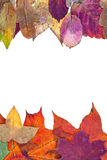 Two side frame from variegated autumn leaves Royalty Free Stock Image
