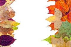 Two side natural frame from autumn leaves Royalty Free Stock Photography