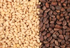 Two sides black and white of pine nuts. Stock Photo