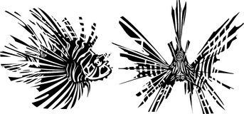 Two sides of a LionFish Royalty Free Stock Image