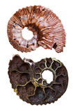 Two sides of mineral fossil ammonite shell Royalty Free Stock Photos