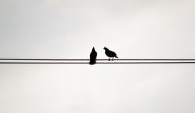 Two silhouette birds on the electricity cable on white backgroun Stock Images