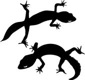 Two silhouettes of gecko Stock Image