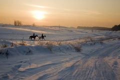 Two silhouettes of horses on snow in winter. Sunset Stock Images