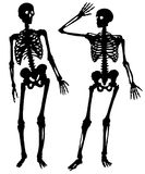 Two silhouettes of a skeleton of the person. On a white background Royalty Free Illustration