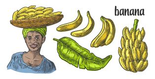 Two single and bunches of fresh banana with leaf. African woman carries a basket with fruits on her head. Royalty Free Stock Image
