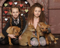 Two sister girls with puppies Royalty Free Stock Image