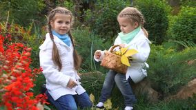 Two sisters in an autumn park. Lovely little girls. The oldest girl found mushrooms. The younger sister holds a wicker basket with fallen leaves. Family fun stock video footage