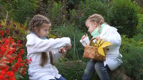 Two sisters in an autumn park. Pick the fallen leaves in a wicker basket. They are looking at mushrooms. Cute little girls. Family fun outdoors stock video footage