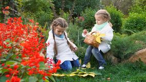 Two sisters in an autumn park. Lovely little girls. The oldest girl found mushrooms. The younger sister holds a wicker basket with fallen leaves. Family fun stock footage