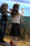 Two sisters and big aquarium Stock Images