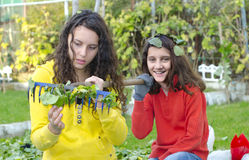 Two sisters doing autumn garden cleaning and having joy Royalty Free Stock Photo