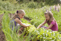 Two sisters in garden. A pretty two sister (age 7 and 9) with garden tools pulling weeds out of the vegetable garden Royalty Free Stock Photos