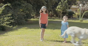 Two sisters playing with a dog outdoors on the grass stock footage