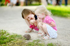 Two sisters playing with a hedgehog Stock Image