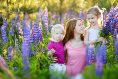 Two sisters and their mother in lupine field Royalty Free Stock Images