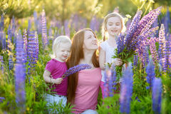 Two sisters and their mother in lupine field Royalty Free Stock Image