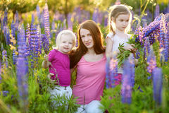 Two sisters and their mother in lupine field Stock Image