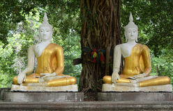 Two Sitting budda statue Stock Images