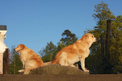 Two sitting dogs protect the house Royalty Free Stock Photos