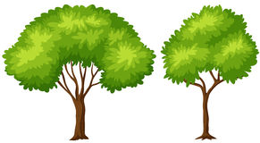 Two sizes of green tree. Illustration Stock Images