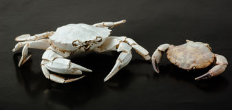 Two skeleton of  crab on black Stock Image