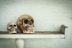 Two skull on shelf. Two mini size human skull on old colored wood shelf royalty free stock images