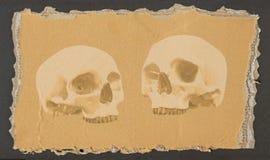 Two skulls 1 stock illustration