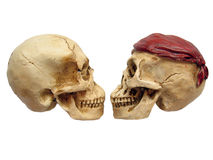 Two Skulls. A couple of skulls facing each other royalty free stock image