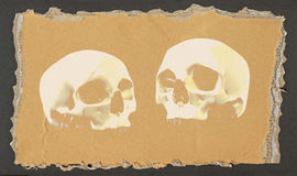 Two skulls 2 Royalty Free Stock Photo