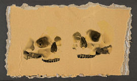 Two skulls 3 Stock Photos