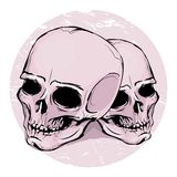 Two skulls Stock Images