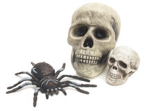 Two skulls and a big spider Stock Images