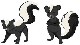 Two skunks on white background Stock Images