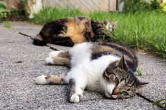 Two sleeping cats Stock Photos