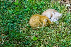 Two sleeping kitten royalty free stock photo