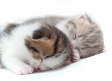 Two sleeping small kittens Stock Image
