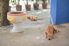 Two sleeping stray dogs in street royalty free stock photos