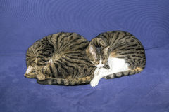 Two sleeping tabby cats Stock Photos