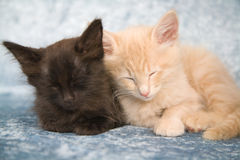 Two sleepy heads Stock Image