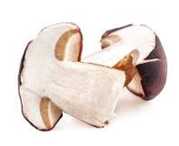 Two sliced forest mushrooms (Boletus badius). Isolated on white background Royalty Free Stock Photography