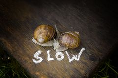 Two Slow Snails. Two snails and a word Slow written in the foreground, outdoor filtered closeup stock images