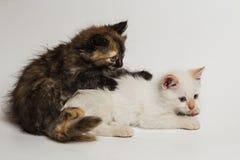 Two small beautiful kittens Stock Photo