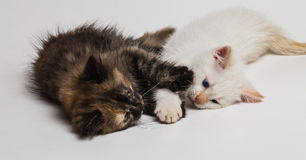 Two small beautiful kittens Stock Photos