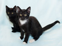 Two small black kitten sitting on pale green Royalty Free Stock Images