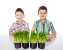 Two small boys with fresh green grass. royalty free stock images