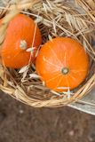 Two Small Bright Orange Heirloom Red Kuri Pumpkins in Wicker Basket Wild Dry Oats. Autumn Fall Atmosphere. Warm earthy colors. Kinfolk Hygge. Thanksgiving stock photography