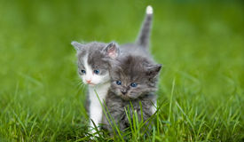 Two small cat Royalty Free Stock Images
